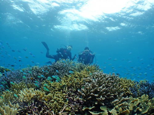 珊瑚の群生