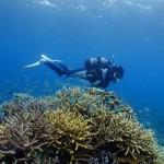珊瑚の上を飛ぶ