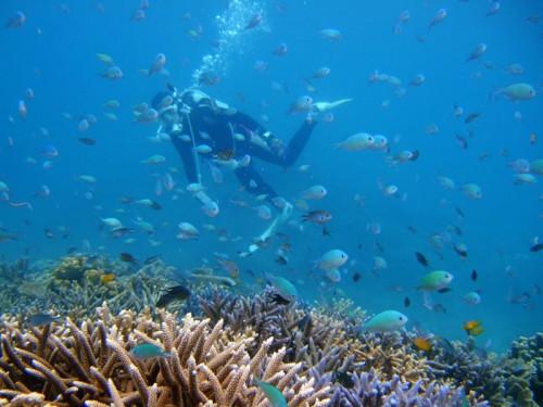 サンゴとデバスズメダイの群れ