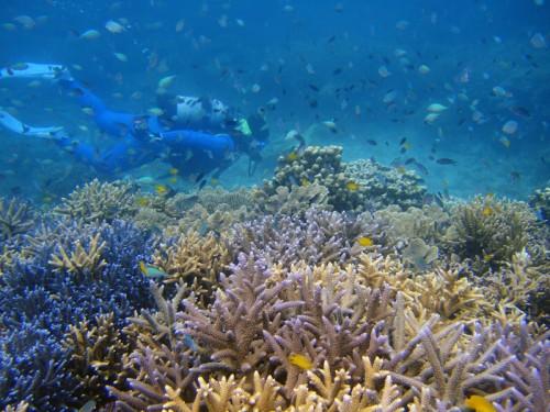 珊瑚群生。