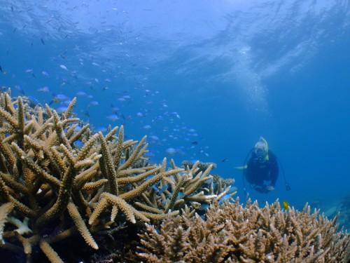 珊瑚群生もりもり