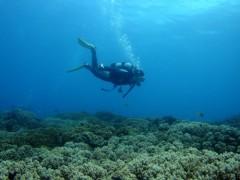 珊瑚の上を
