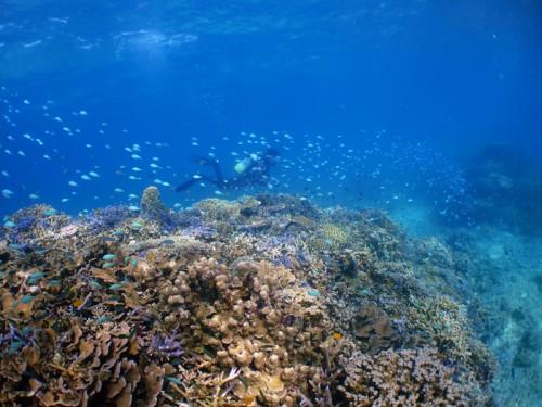 珊瑚群生☆