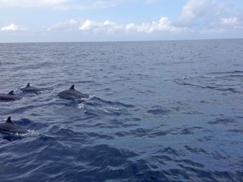 イルカの群
