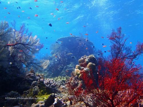パナリ島竜宮の根