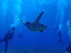 海底遺跡ウミガメ