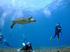 ウミガメ海底遺跡