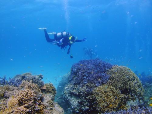 サンゴの上を飛ぶ