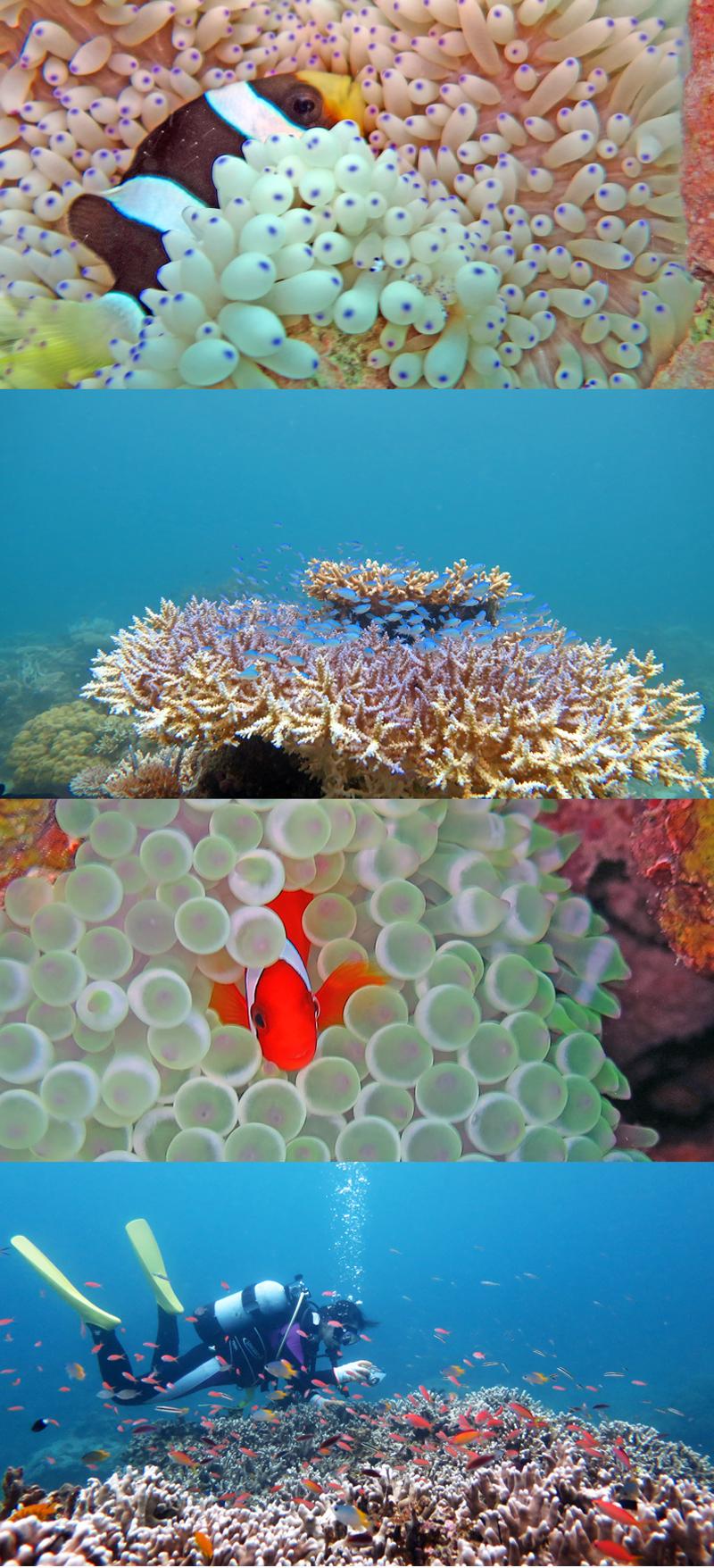 サンゴモリモリ