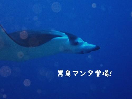 黒島マンタ